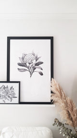 Black and White Waratah print