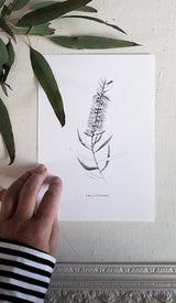 BOTANICAL PRINTS A5