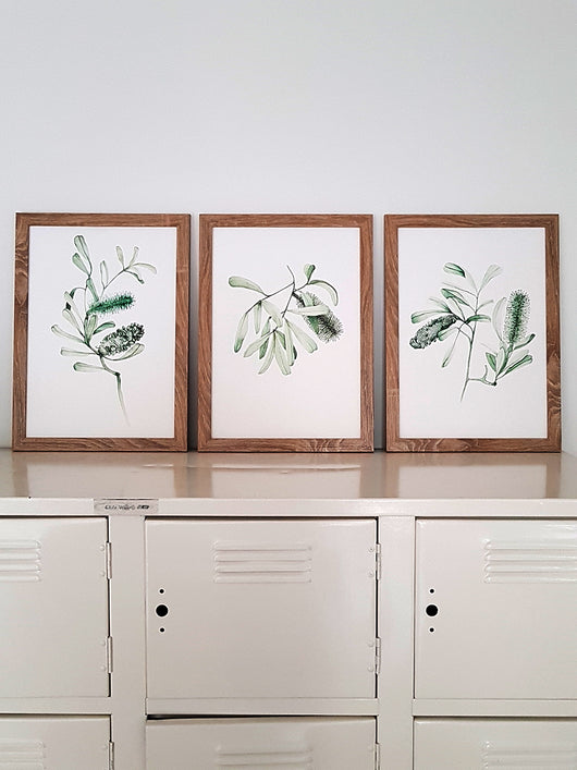 Banksia Collection-Set of 3 Prints