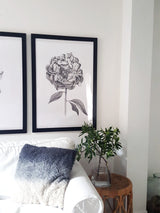 Peony illustration, buy on it's own or as a set of 3 with the Magnolia and Protea print.