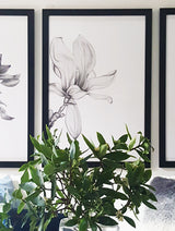 Magnolia illustration, hand drawn using pencil, also comes in a set of 3 with the Protea and Peony