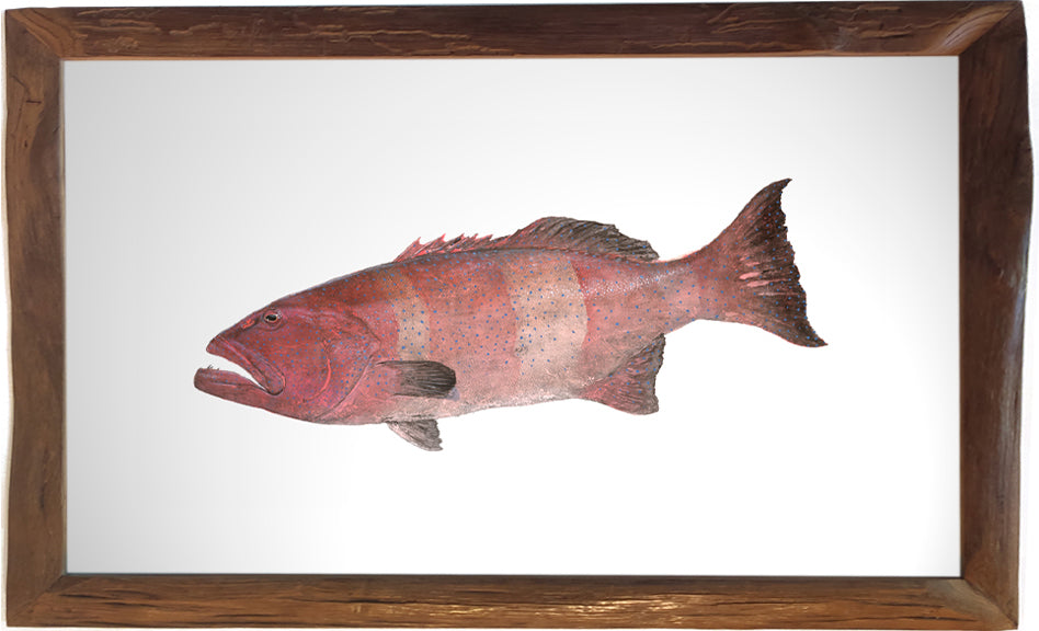 Gyotaku Coral Trout fish painting