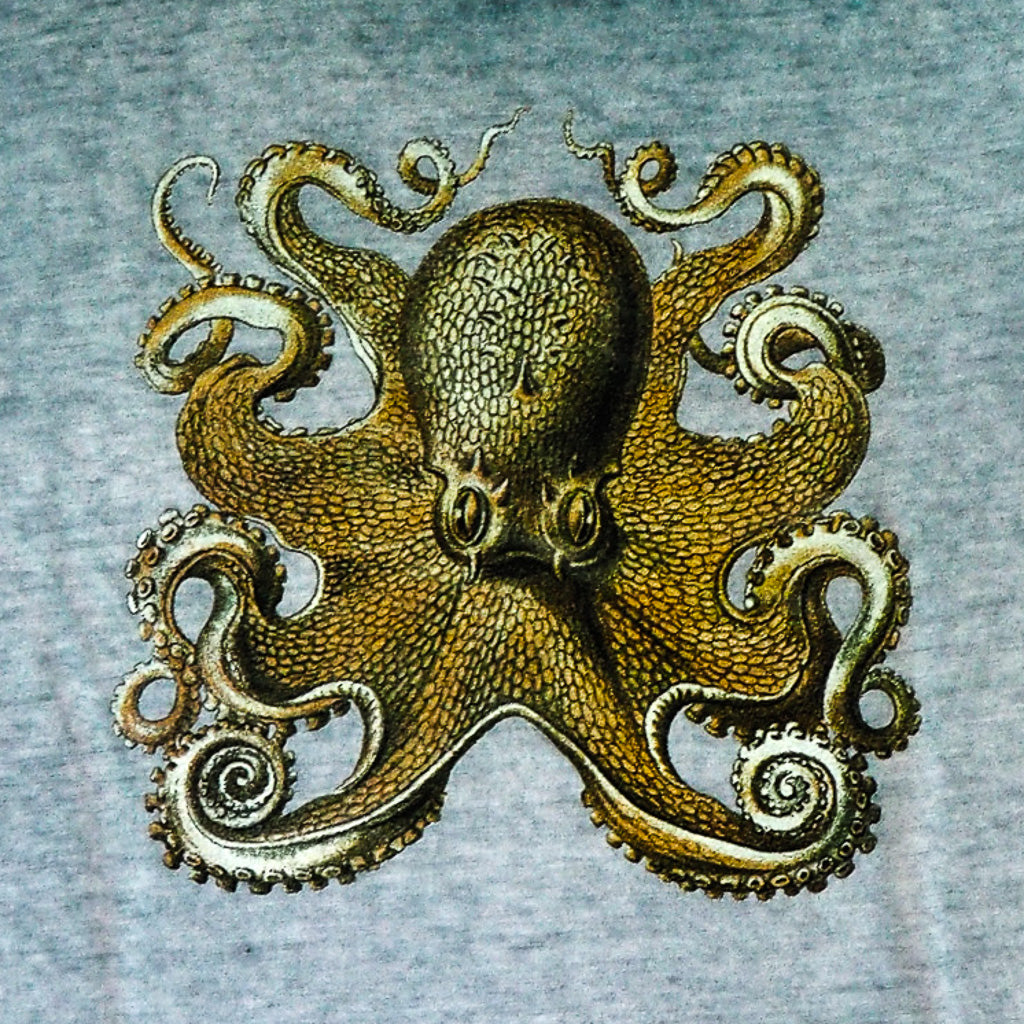 HECKEL OCTOPUS