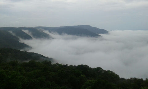 Dajipur Wildlife Sanctuary (Kolhapur): Stay in Standard Room, Jungle Safari, Sightseeing & MORE!