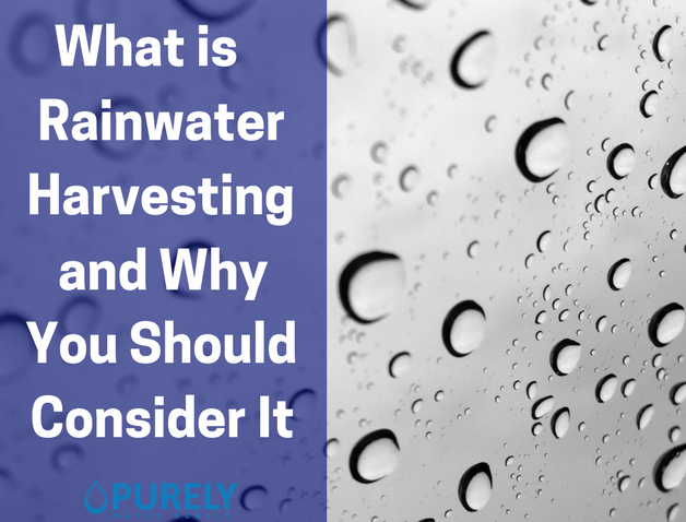 What is Rainwater Harvesting and Why You Should Consider It