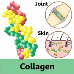 collagen for dogs and cats