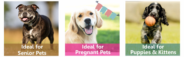 supplement for pregnant dogs