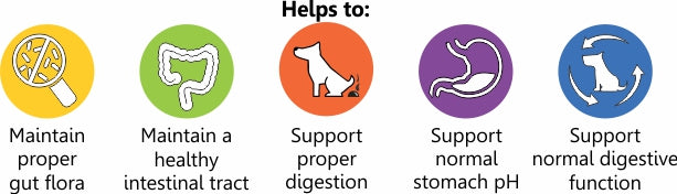 probiotics for dogs 1