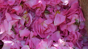 New Essential Oil For the Rose Lover: Rose and Geranium Oil