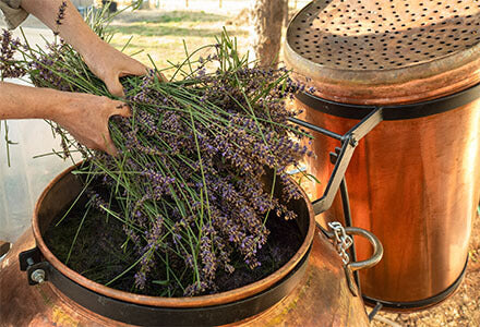 filling the still with lavender
