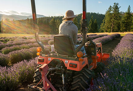 tending to the lavender field