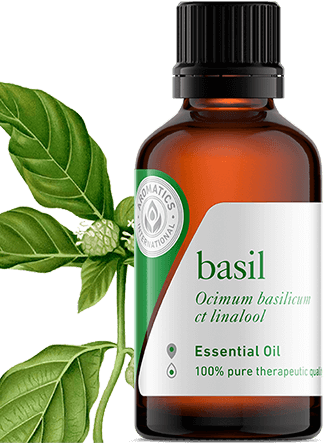 basil (sweet) oil