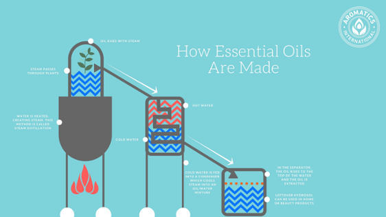 How_essential_oils_are_made.png