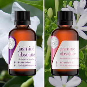 Essential Oils for Valentine's Day jasmine absolute sambac jasmine absolute grandiflorium