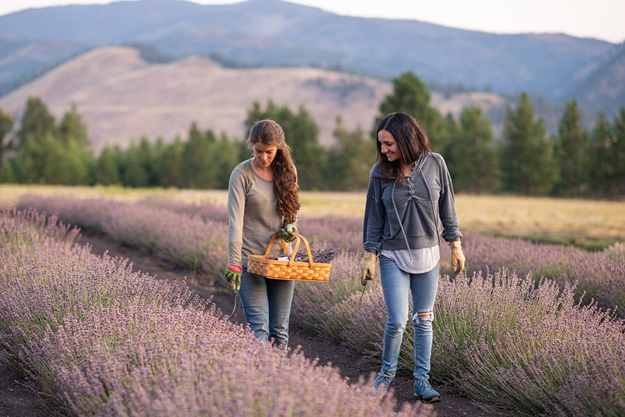 Our Artisan Lavender Products