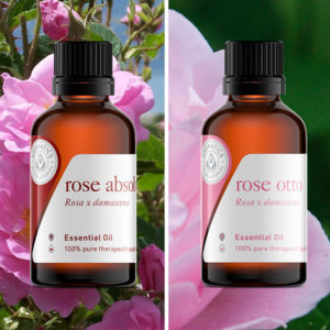Essential Oils for Valentine's Day rose otto oil rose absolute