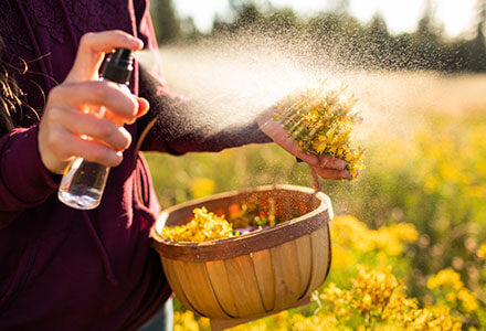 spraying st. john's wort with alcohol