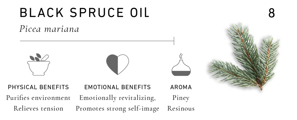 Essential Oils for Men: Black Spruce