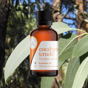 Eucalyptus Globulus Authentic Essential Oil