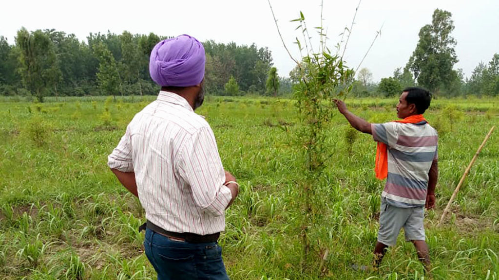 gurpreet tends to the field with one of his workers