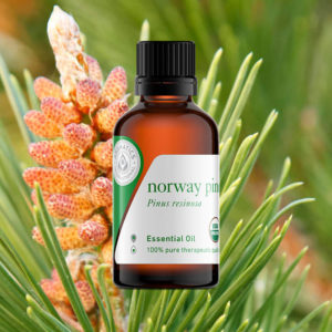 13 Essential Oils for Seasonal Affective Disorder norway pine oil