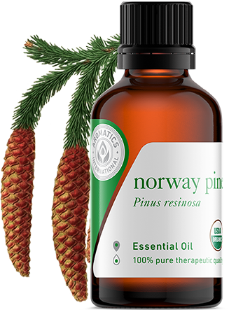 norway pine oil