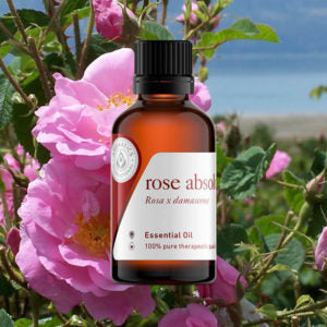 13 Essential Oils for Seasonal Affective Disorder Rose Absolute Oil