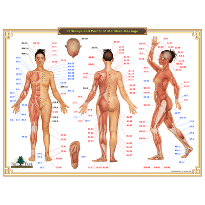 Acupressure Chart - 12 Meridians and Points