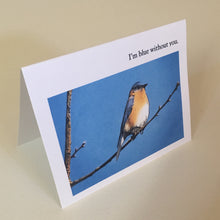 Bluebird Greeting Cards, 4 Pack, Blank Card, Gift, Birdwatcher Gift, Thinking of You, Miss You, Nature Gift, Blue Bird Card #C8