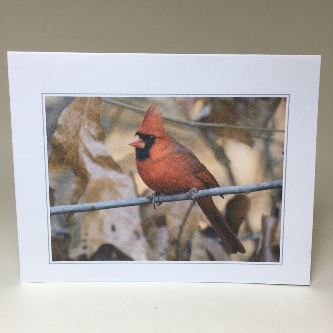 Cardinal Greeting Cards, 4 Pack, Cardinal Gift, Birdwatcher Gift, Thinking of You, Miss You, Bereavement Gift, Sympathy Card #C19