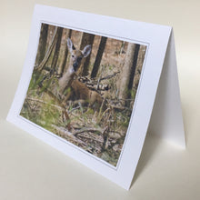 Deer Greeting Cards, 4 Pack, Gift, Nature Gift, Thinking of You, Miss You,  Nature Card, Wildlife Card #C11