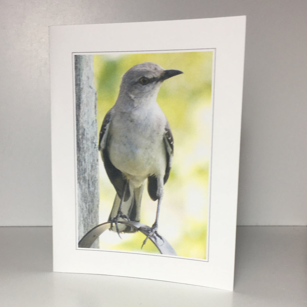 Mockingbird Card, Greeting Cards, Farmhouse Card, 4 Pack, Stationery, Note Card, Card for Friend #C27