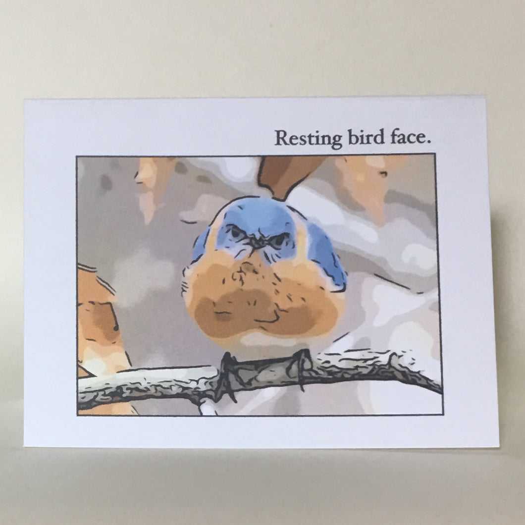 Bluebird Greeting Cards, 4 Pack, Birdwatcher Gift, Thinking of You, Blank Card #C18