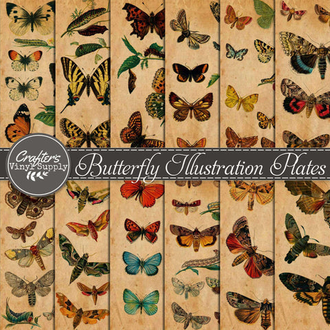Butterfly Illustration Plates