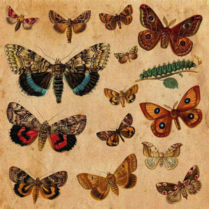 "Crafter's Vinyl Supply Cut Vinyl ORAJET 3651 / 12"" x 12"" Butterfly Illustration Plate 6 - Pattern Vinyl and HTV by Crafters Vinyl Supply"