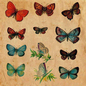 "Crafter's Vinyl Supply Cut Vinyl ORAJET 3651 / 12"" x 12"" Butterfly Illustration Plate 9 - Pattern Vinyl and HTV by Crafters Vinyl Supply"