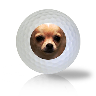 Chihuahua Golf Balls - Half Price Golf Balls - Canada's Source For Premium Used & Recycled Golf Balls