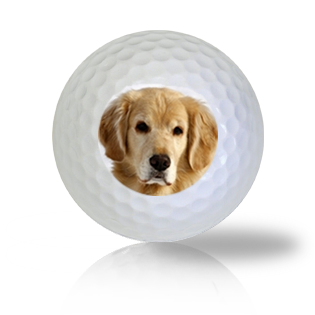 Golden Retriever Golf Balls - Half Price Golf Balls - Canada's Source For Premium Used & Recycled Golf Balls