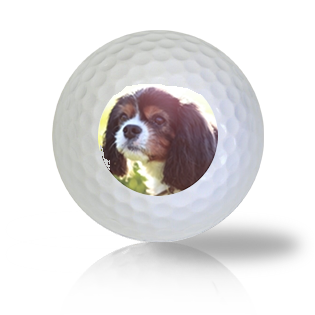 King Charles Spaniel Golf Balls - Half Price Golf Balls - Canada's Source For Premium Used & Recycled Golf Balls