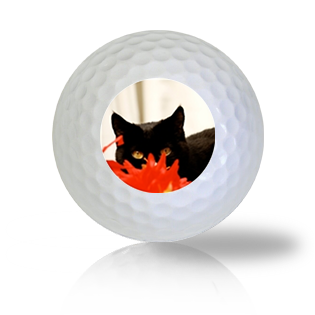 Ninja Cat Golf Balls - Half Price Golf Balls - Canada's Source For Premium Used & Recycled Golf Balls