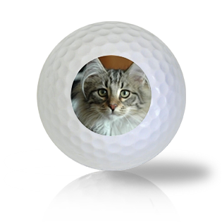 Norwegian Forest Cat Golf Balls - Half Price Golf Balls - Canada's Source For Premium Used & Recycled Golf Balls