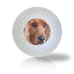 Cocker Spaniel Golf Balls - Half Price Golf Balls - Canada's Source For Premium Used & Recycled Golf Balls