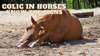 COLIC IN HORSES – KNOW THE SIGNS