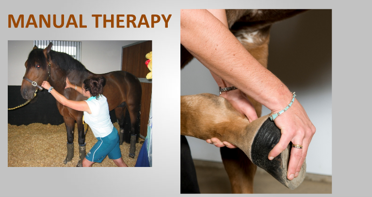 Manual Equine Therapy