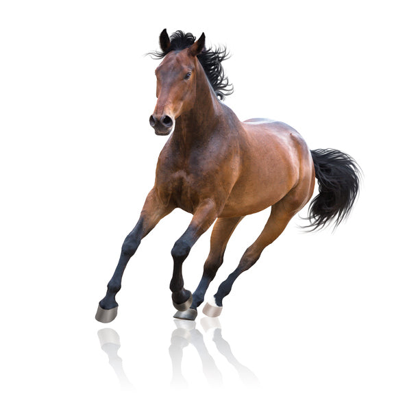Identifying behavioral pain indicators in your horse