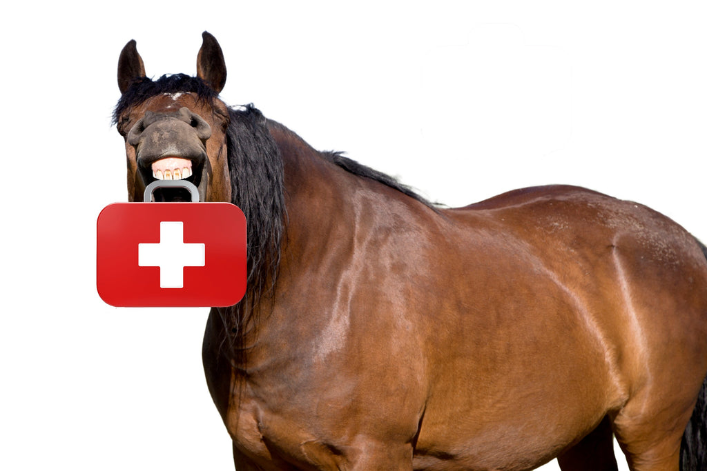 Essentials for your Equine First Aid Kit