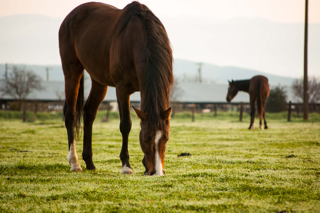 All natural options for weed control in your horse pastures