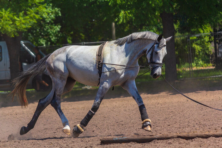 The Thoroughbred Makeover and National Symposium - Retired racehorse project 2018