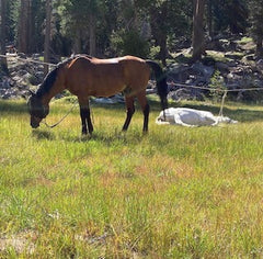 Grazing on the Tahoe Rim Trail