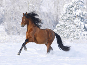 Horses_wallpapers_369
